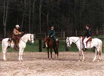 pferd beißt andere pferde